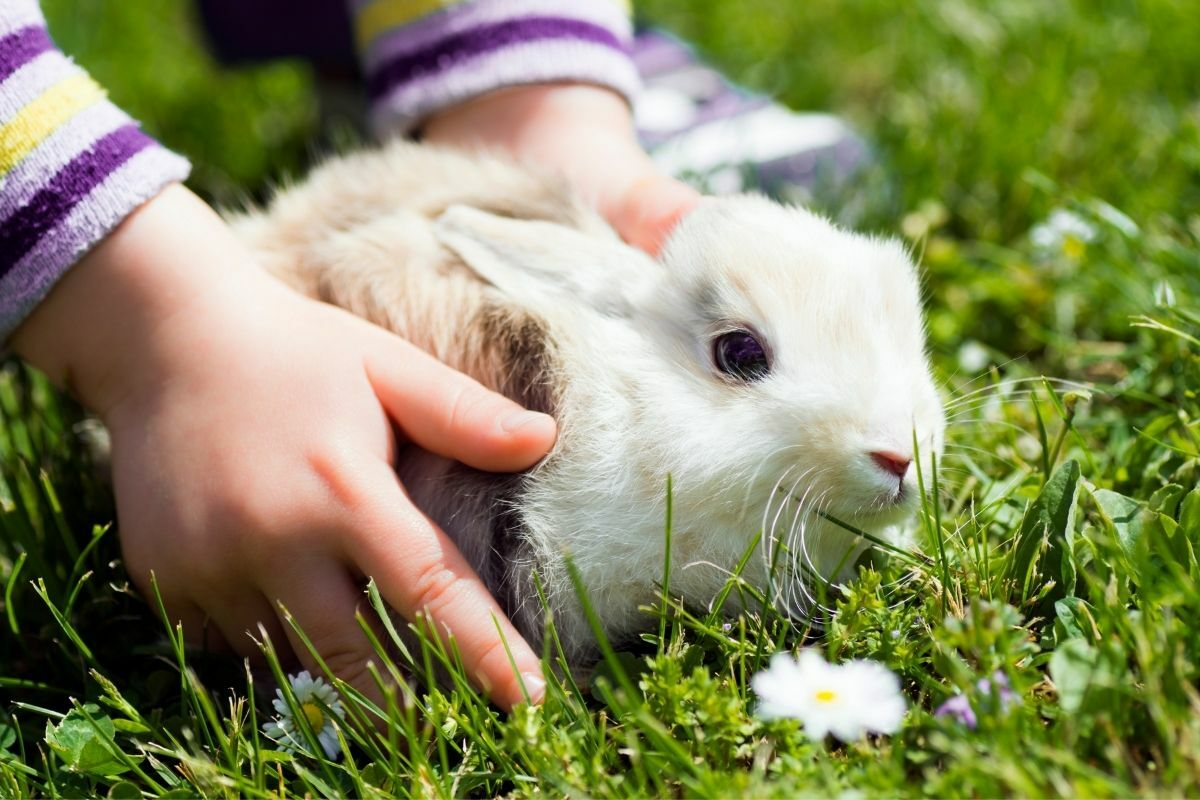 Nyuszi a kézben tavasszal